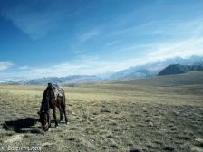 1-cheval-et-libertc3a9-300-dpi1