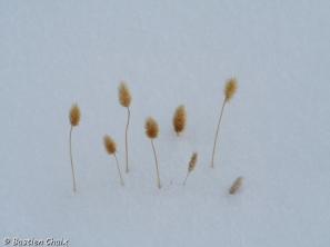 30-plantes-dans-la-neige-kirghizistan