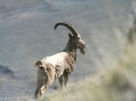 sarychat-ertash_20090614_01760-r
