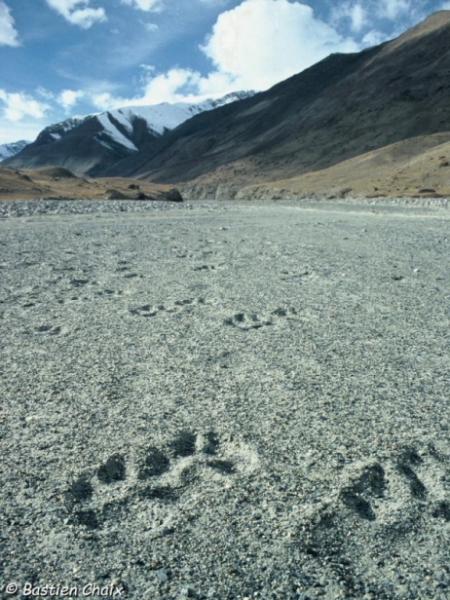 traces-de-loups